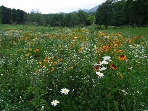 花の草原.jpg