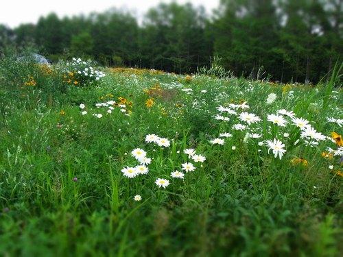 花の草原2.jpg